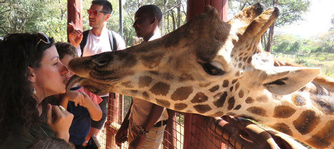 kissing-giraffe