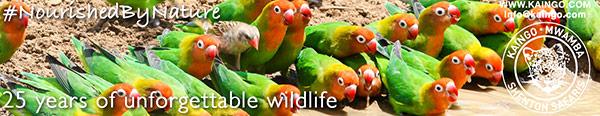 Shenton Safaris
