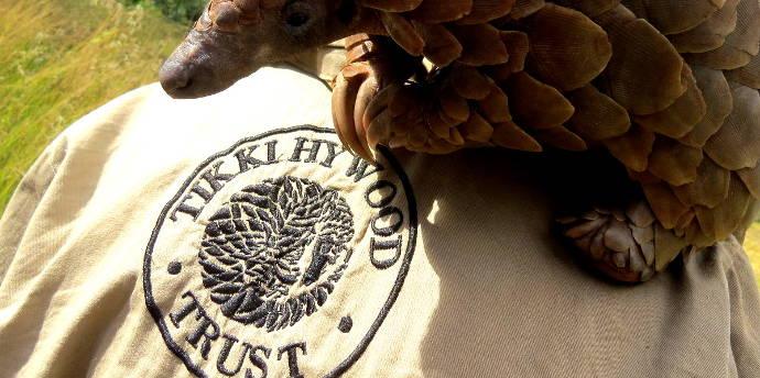 pangolin-tikki-haywood-trust