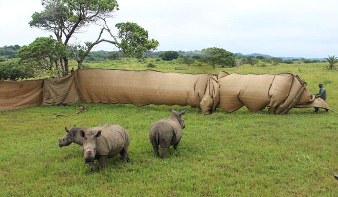 rhino orphans iSimangaliso Wetland Park
