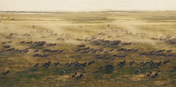 tanzania-migration-zebras