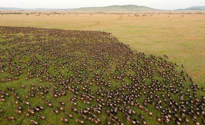 tanzania-migration