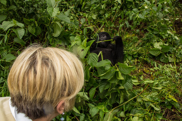 watching-gorillas