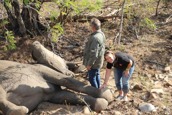 Collaring-with-Elephants-Alive