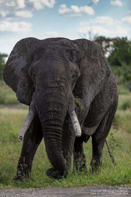 Eco-Training-Makuleke-elephant