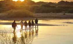 Kichaka-walking-safaris