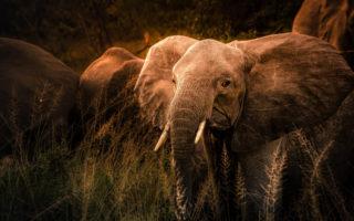 Tanzania-Elephant