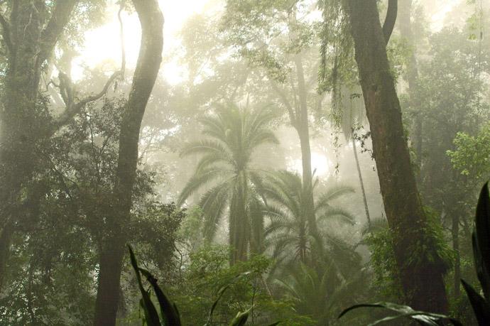 Udzungwas-Palms