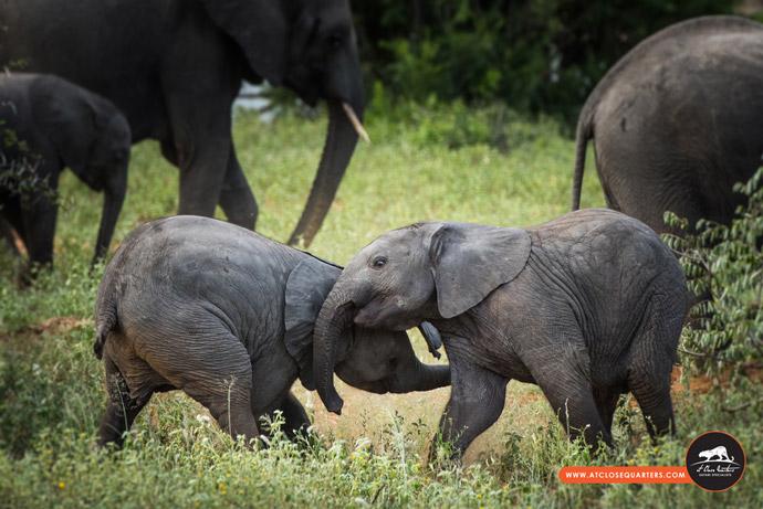 baby-elephants