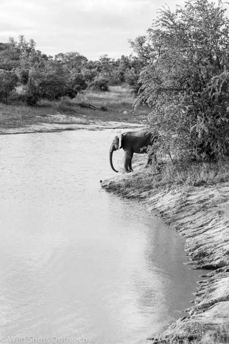 elephant-black-and-white
