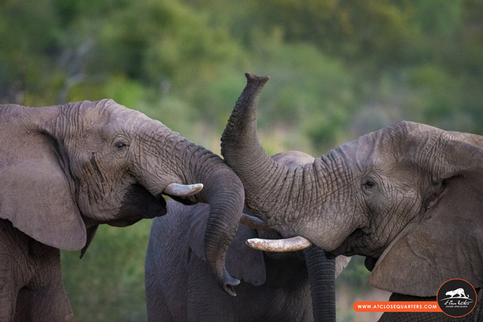 elephant-greeting