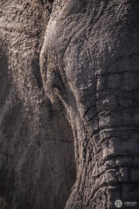 elephant-texture