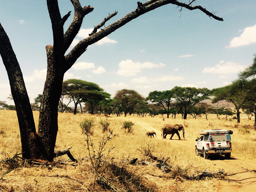 elephants-crossing-road-adventure