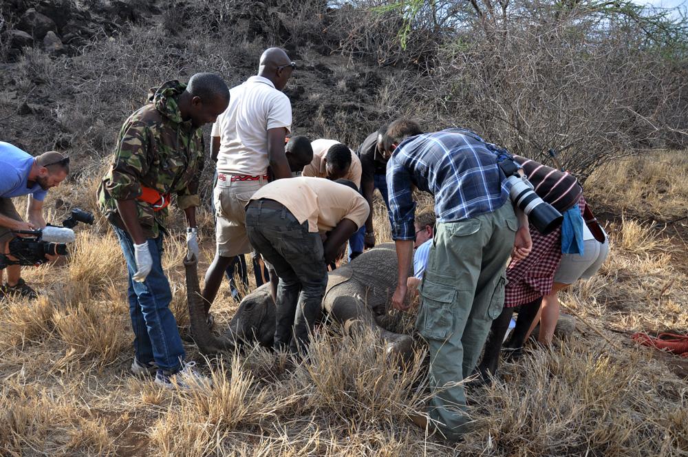 saving shaba the elephant