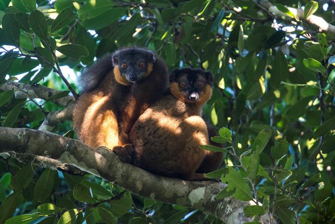 wildlife-madagascar