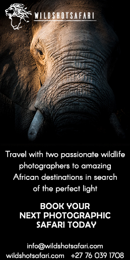 Wildshot Safari