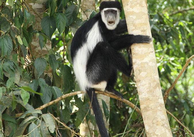 the top ten must-see primates of uganda