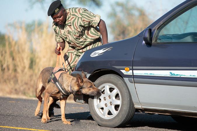 dog detection unit, Zambia