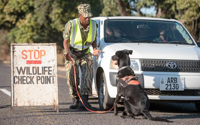 dog detection unit South Luangwa Zambia