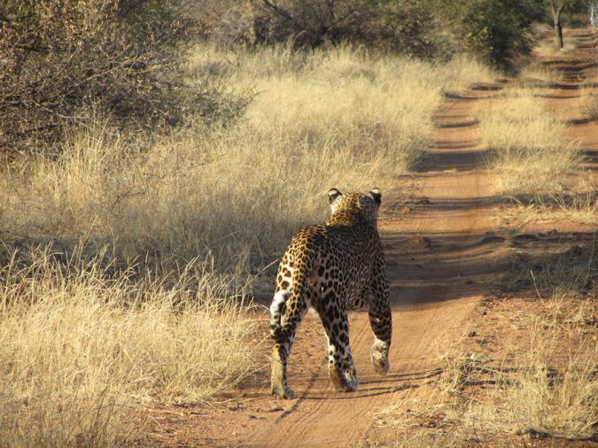 leopard, Africa, ©Simon Espley