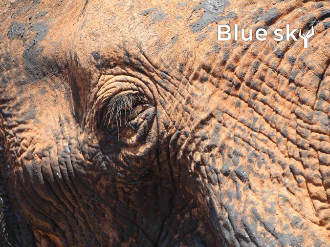 Africa expedition, elephant, Blue Sky Society, fundraising