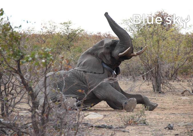 Elephant Ignite Expedition, Blue Sky Society
