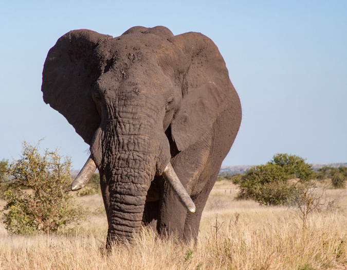 ©Karen Blackwood elephant in nature