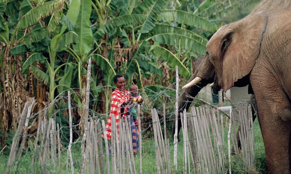 A mother and child watch an elephant over a protective fence