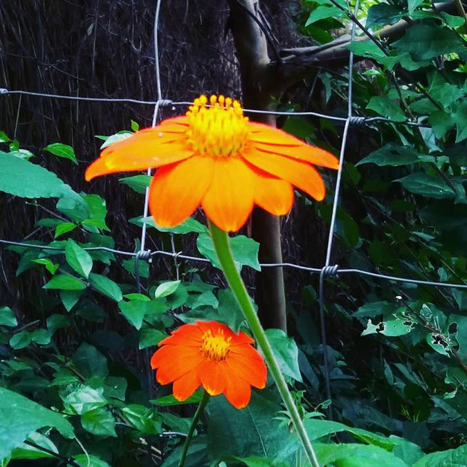 Blooming flowers in Zambia