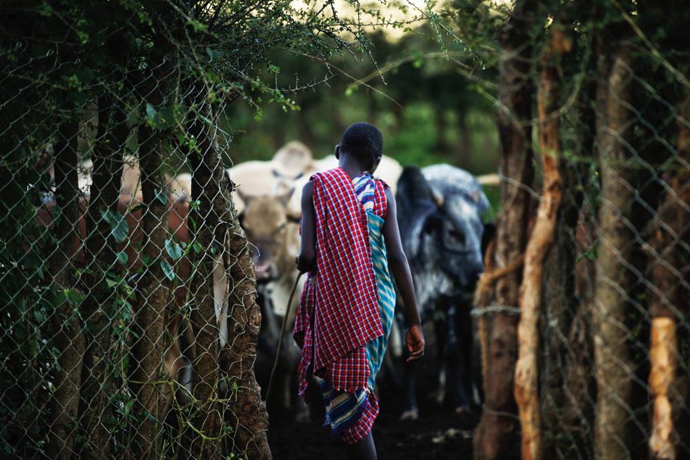 Herders and their herd