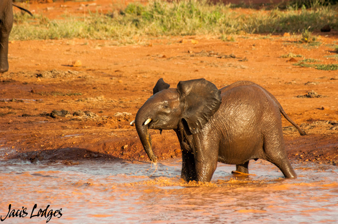 Elephants, baby elephant, waterhole, Madikwe
