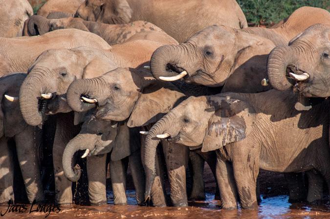 Elephants, waterhole, Madikwe