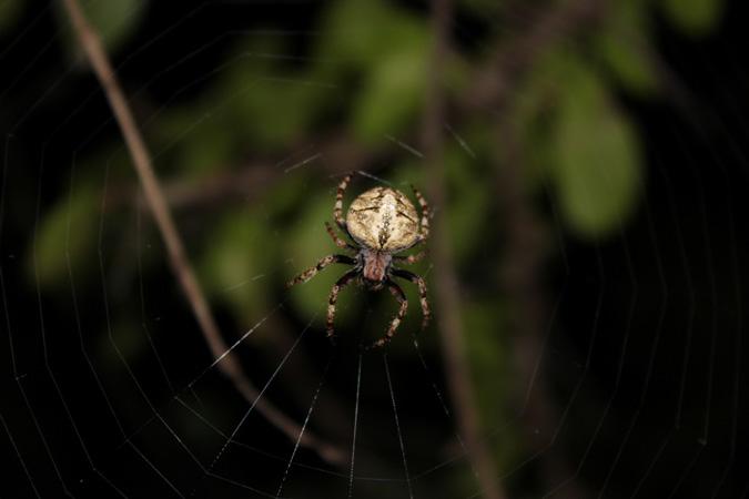 Cheetah Plains, after the rain, spider