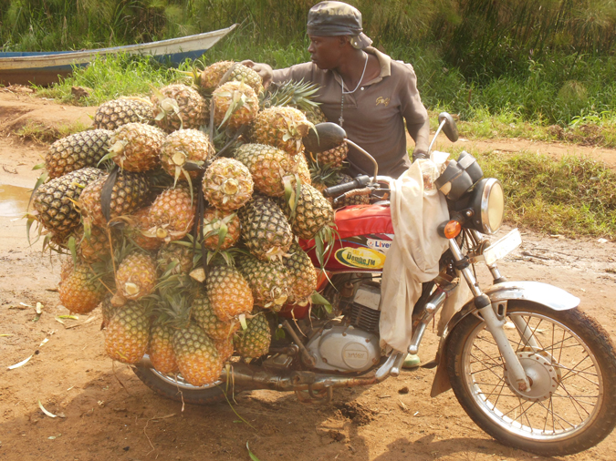 Pineapples, Mabamba Bay, Uganda