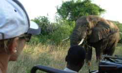 Big 5, malaria-free safari, South Africa