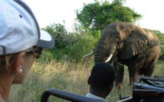 Big 5, malaria-free safari, South Africa