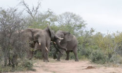 elephant behaviour