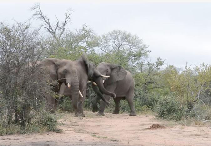 elephant behaviour