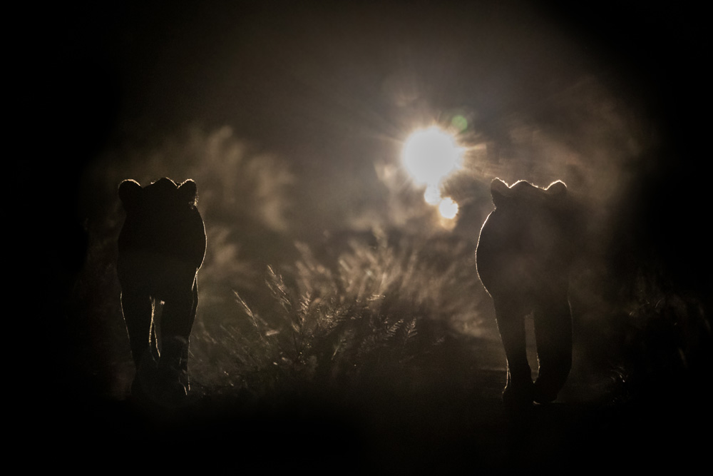 A night drive in the Kruger