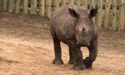 Thula Thula Rhino Orphanage
