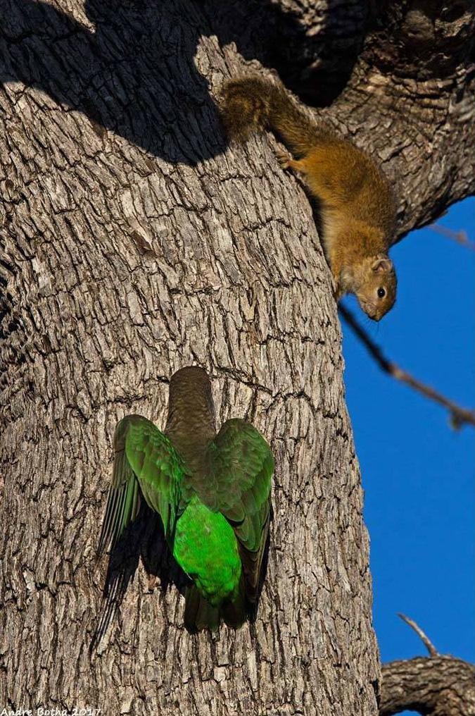 Squirrel, parrot, South Africa, Kruger National Park