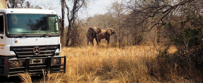 relocating animals, southern Africa, Peace Parks Foundation