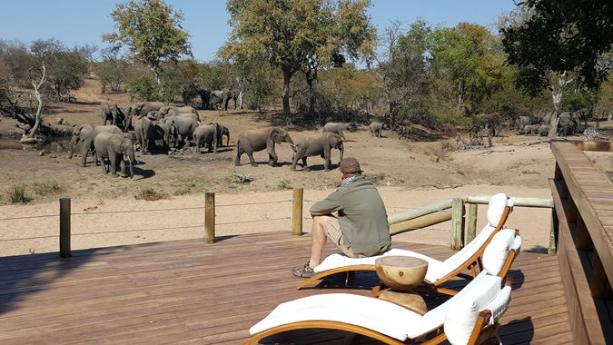 Wildlife, safari, elephants