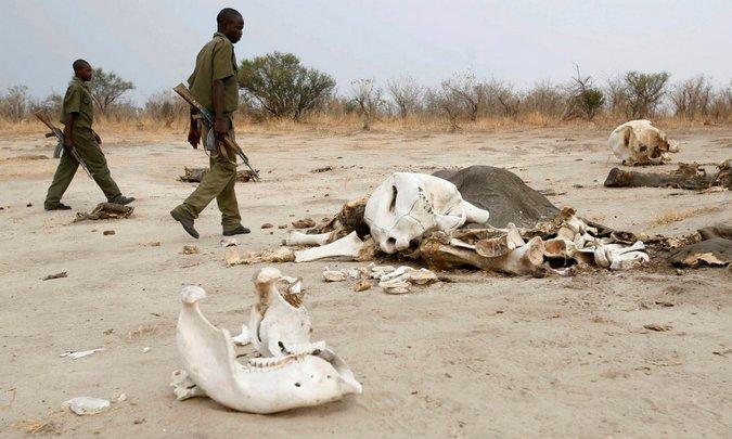 elephant, human-elephant confict, Zimbabwe