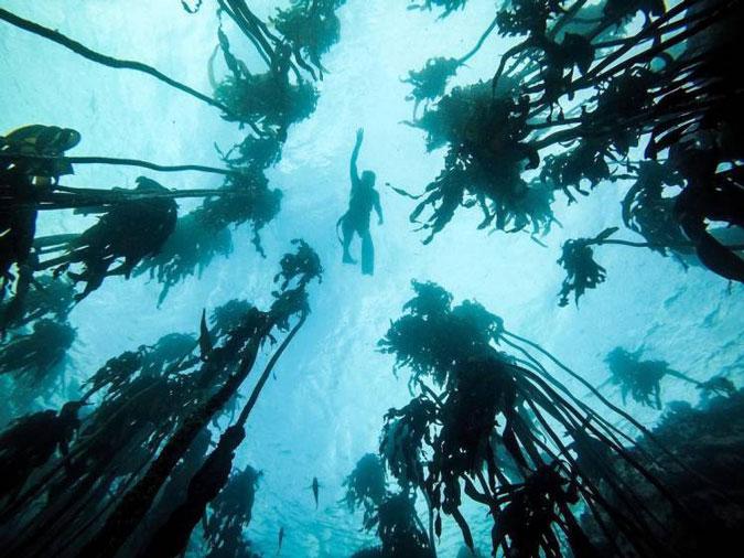 Ocean-diver