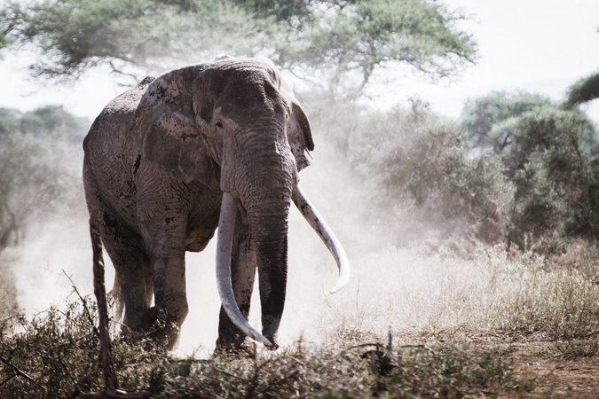 elephant, human-elephant conflict, Africa