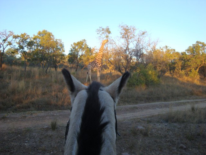 Horse riding, Limpopo, The Ant's Collection