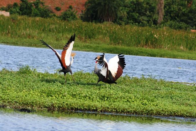 Birds, Lutembe Bay, Uganda