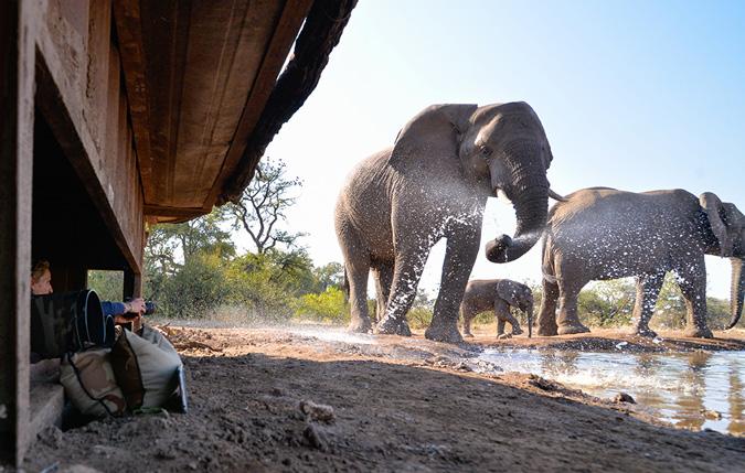 elephant, photographic hide, Mashatu, Botswana