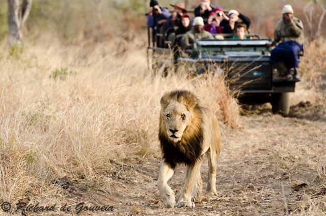 the lions of sabi sand netflix